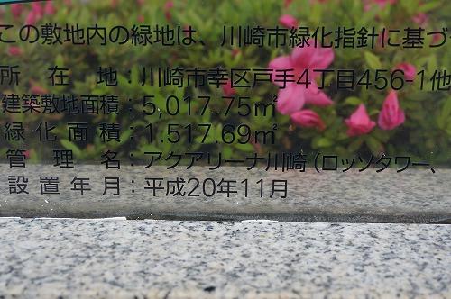 DSC04242.jpg