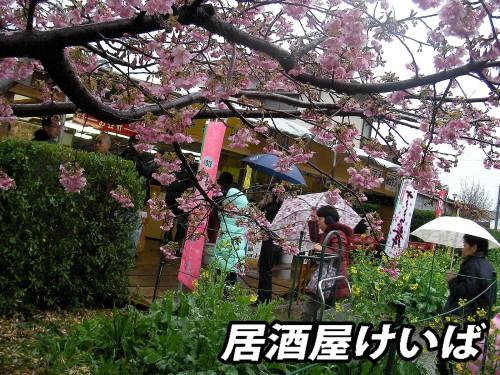 河津桜7.jpg